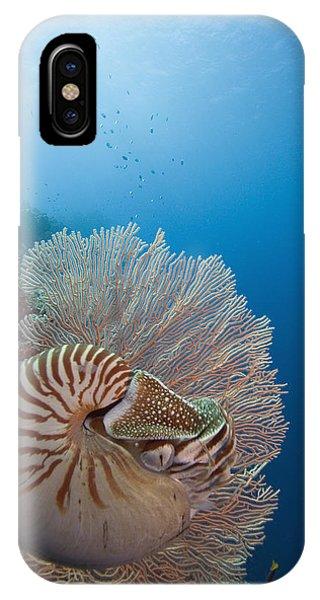 Chambered Nautilus IPhone Case