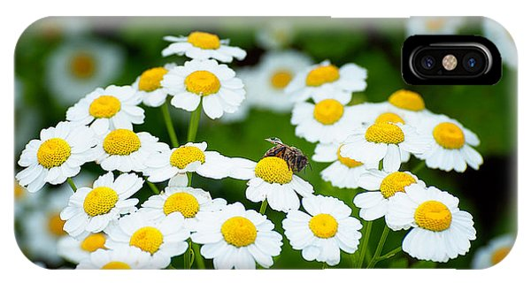Chamomile Pollinating IPhone Case