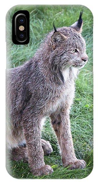 Champion Mama Lynx IPhone Case