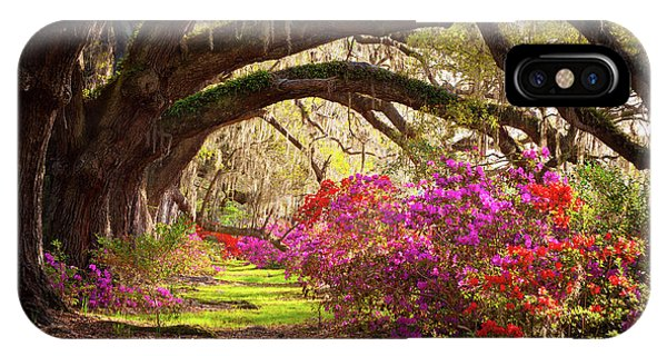 Charleston Sc Magnolia Plantation Gardens - Memory Lane IPhone Case