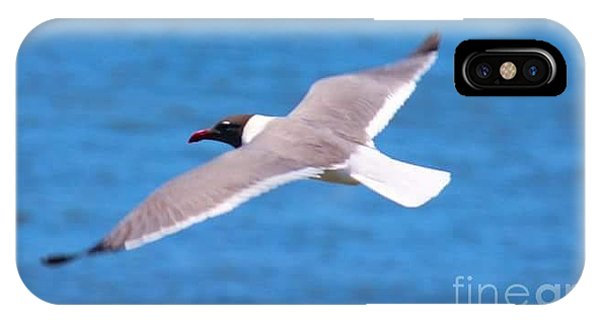 iPhone Case - Charleston Wildlife. Seagull by Lisa Marie Towne
