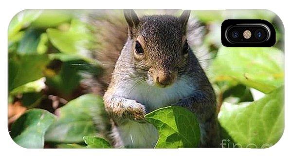 iPhone Case - Charleston Wildlife. Squirrel by Lisa Marie Towne