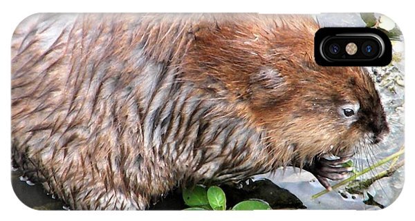 Charley The Muskrat IPhone Case