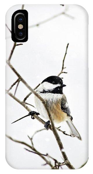 Charming Winter Chickadee IPhone Case