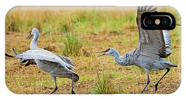 Sandhill Crane iPhone Case - Chase by Mike Dawson