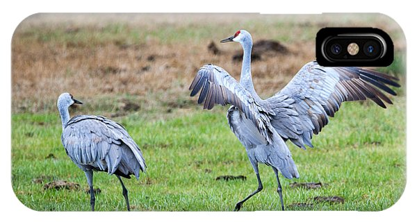 Sandhill Crane iPhone Case - Check The Moves by Mike Dawson
