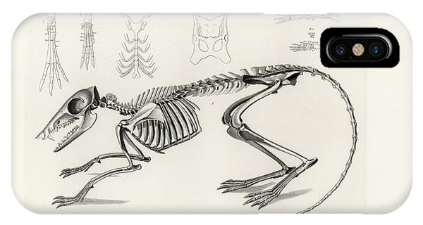 IPhone Case featuring the drawing Checkered Elephant Shrew Skeleton by W Wagenschreiber