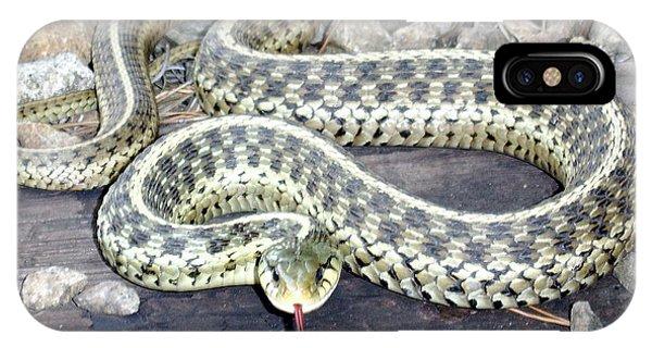 Checkered Garter Snake IPhone Case