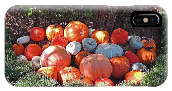 Cheekwood Gardens Most Sincere Pumpkin Patch IPhone Case