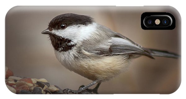 Cheeky Chickadee IPhone Case