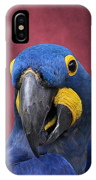 Cheeky Macaw IPhone Case