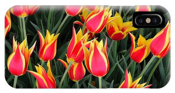 Cheerful Spring Tulips IPhone Case