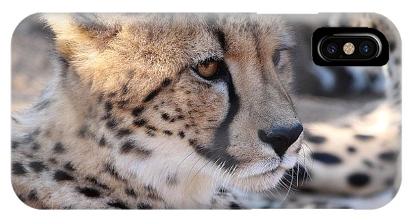 Cheetah And Friends IPhone Case