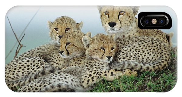 Mp iPhone Case - Cheetah And Her Cubs by Yva Momatiuk John Eastcott
