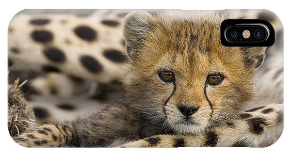 Mp iPhone Case - Cheetah Cub Portrait by Suzi Eszterhas