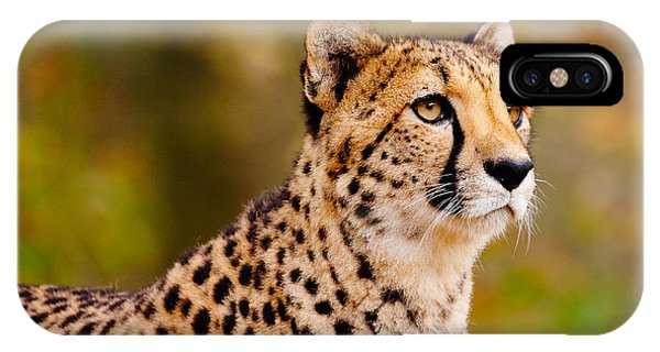 Cheetah In A Forest IPhone Case