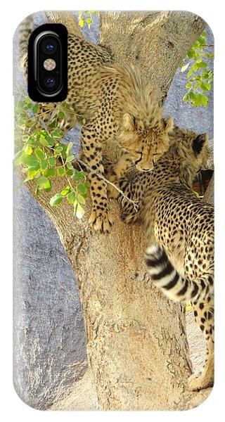 Cheetah Traffic Jam IPhone Case