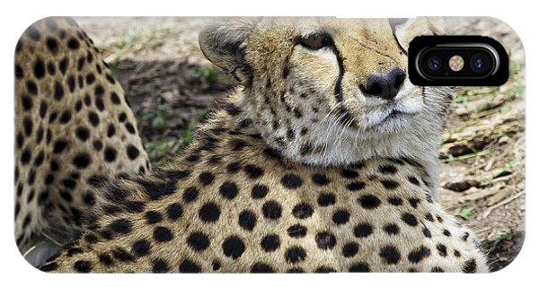 Cheetahs Resting IPhone Case