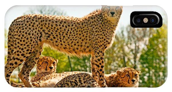 Cheetahs Three IPhone Case