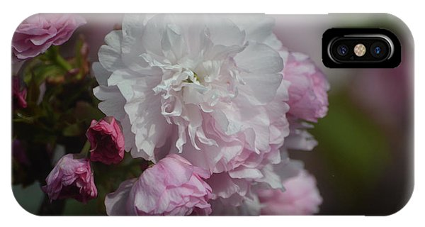 Cherry Blossom 2 IPhone Case