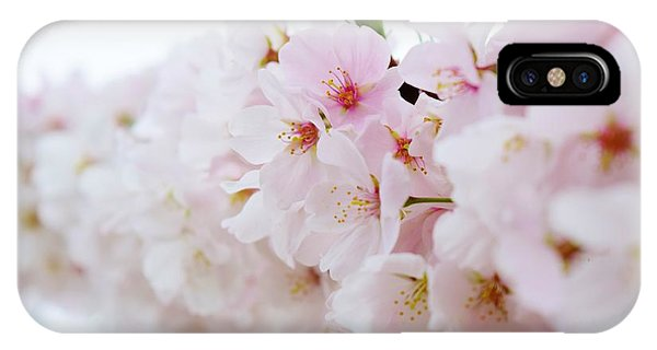 Cherry Blossom Focus IPhone Case