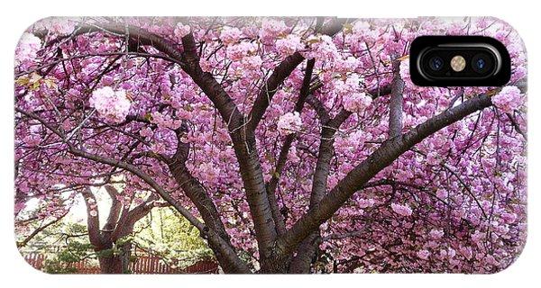 Cherry Blossom Wonder IPhone Case