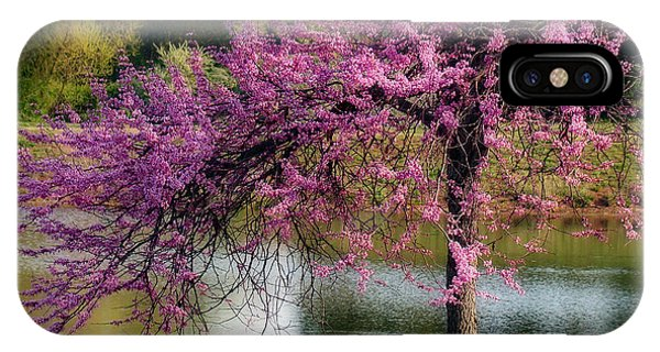 Cherry Blossoms By The Pond IPhone Case