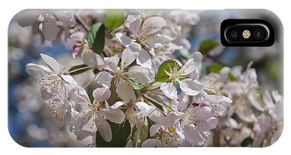 D.c. iPhone Case - Cherry Blossoms by Joan Carroll
