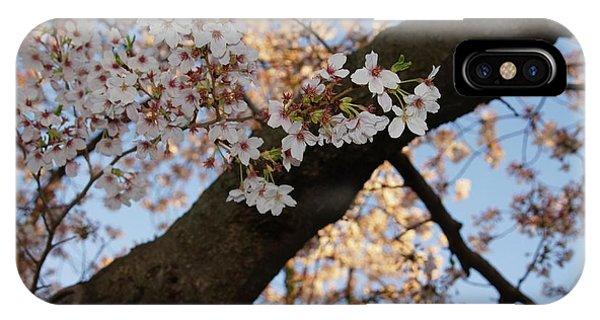 iPhone Case - Cherry Blossoms by Megan Cohen