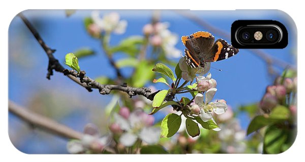 Monarch Butterfly On Cherry Tree IPhone Case