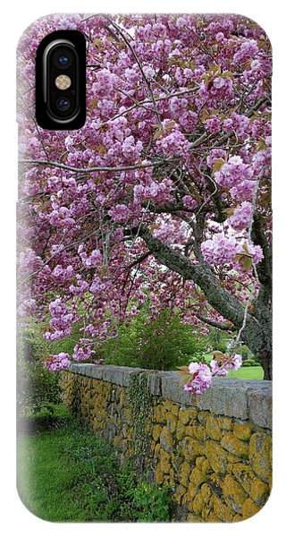 Cherry Tree, Cape Cod IPhone Case