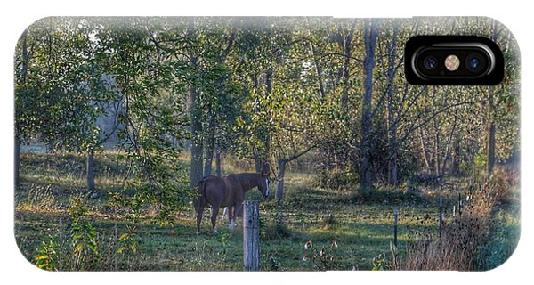 1009 - Chestnut Horse Among The Trees IPhone Case