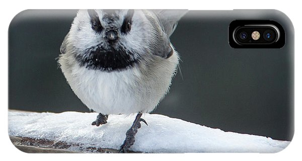 Chic At Big Springs Wildlife Art By Kaylyn Franks IPhone Case