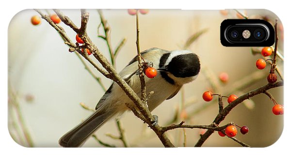 Chickadee 1 Of 2 IPhone Case