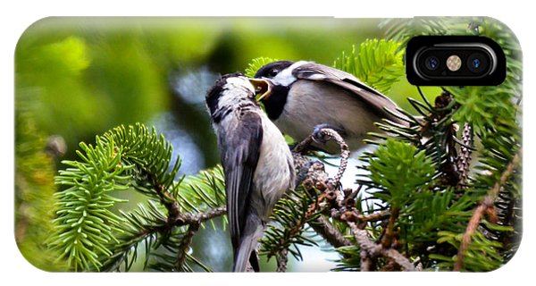 Chickadee Feeding Time IPhone Case