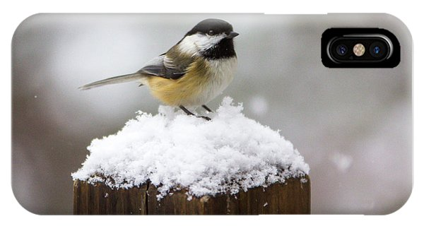 Chickadee In The Snow IPhone Case