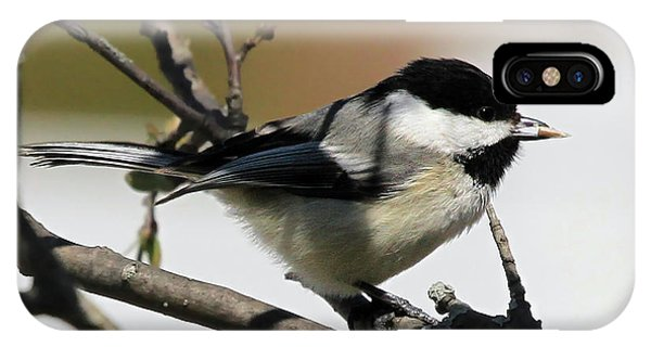 IPhone Case featuring the photograph Chickadee With A Sunflower Seed by Jackson Pearson