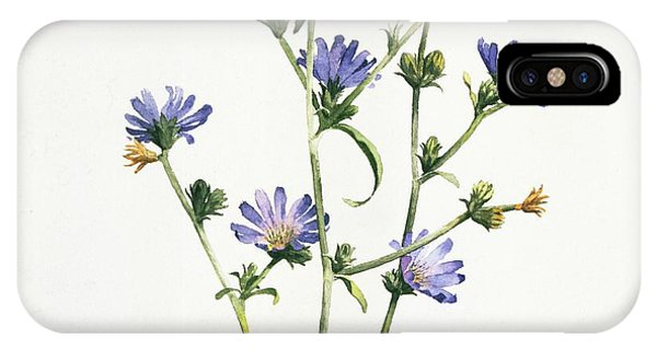 Chicory IPhone Case
