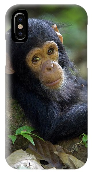 Chimpanzee Pan Troglodytes Baby Leaning IPhone Case