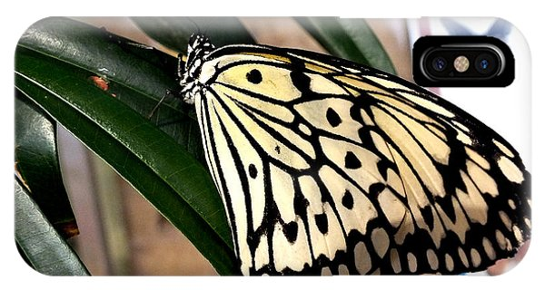 Chinese Yellow Swallowtail IPhone Case