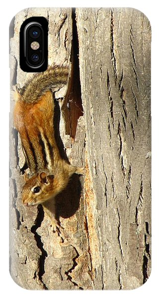 Chipmunk In Fall IPhone Case
