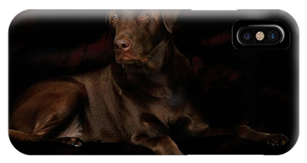 Chocolate Lab Dog IPhone Case