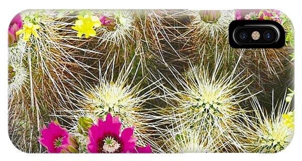Cholla Cactus Blooms IPhone Case