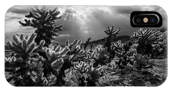 Teddy Bear Cholla iPhone Case - Cholla Cactus Garden Bathed In Sunlight In Black And White by Randall Nyhof