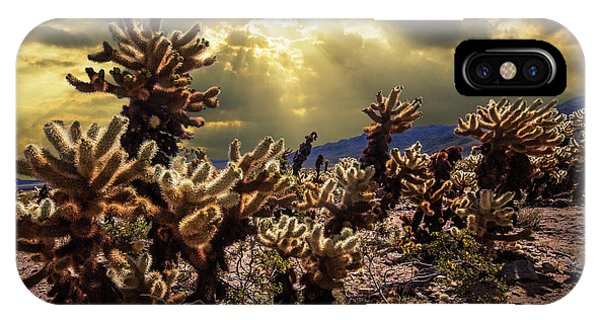 Teddy Bear Cholla iPhone Case - Cholla Cactus Garden Bathed In Sunlight In Joshua Tree National Park by Randall Nyhof