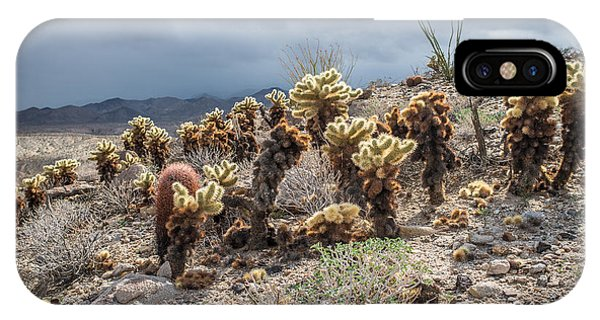 Cholla Family With Guests IPhone Case