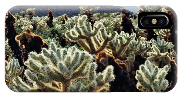 Cylindropuntia Bigelovii iPhone Case - Cholla Teddy Bear Cactus Garden Art by Kyle Hanson