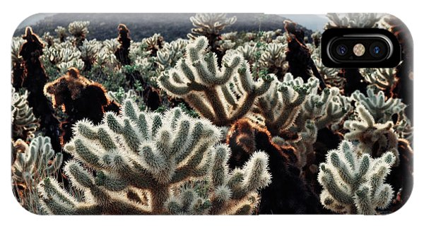 Cylindropuntia Bigelovii iPhone Case - Cholla Teddy Bear Cactus Garden Landscape by Kyle Hanson