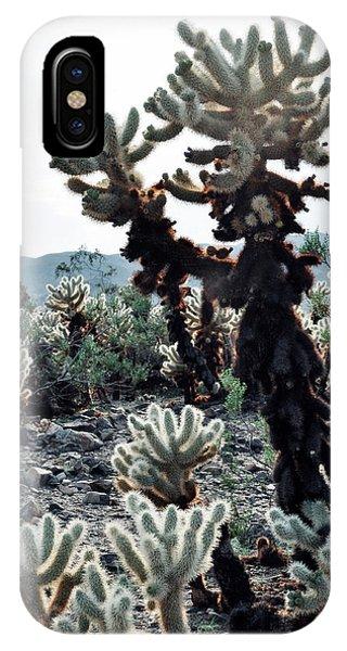 Cylindropuntia Bigelovii iPhone Case - Cholla Teddy Bear Cactus Garden Portrait by Kyle Hanson