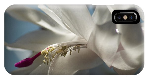 Christmas Cactus Blossom IPhone Case